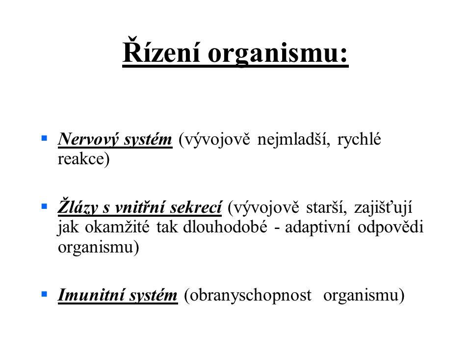 Řízení organismu: Nervový systém (vývojově nejmladší, rychlé reakce)