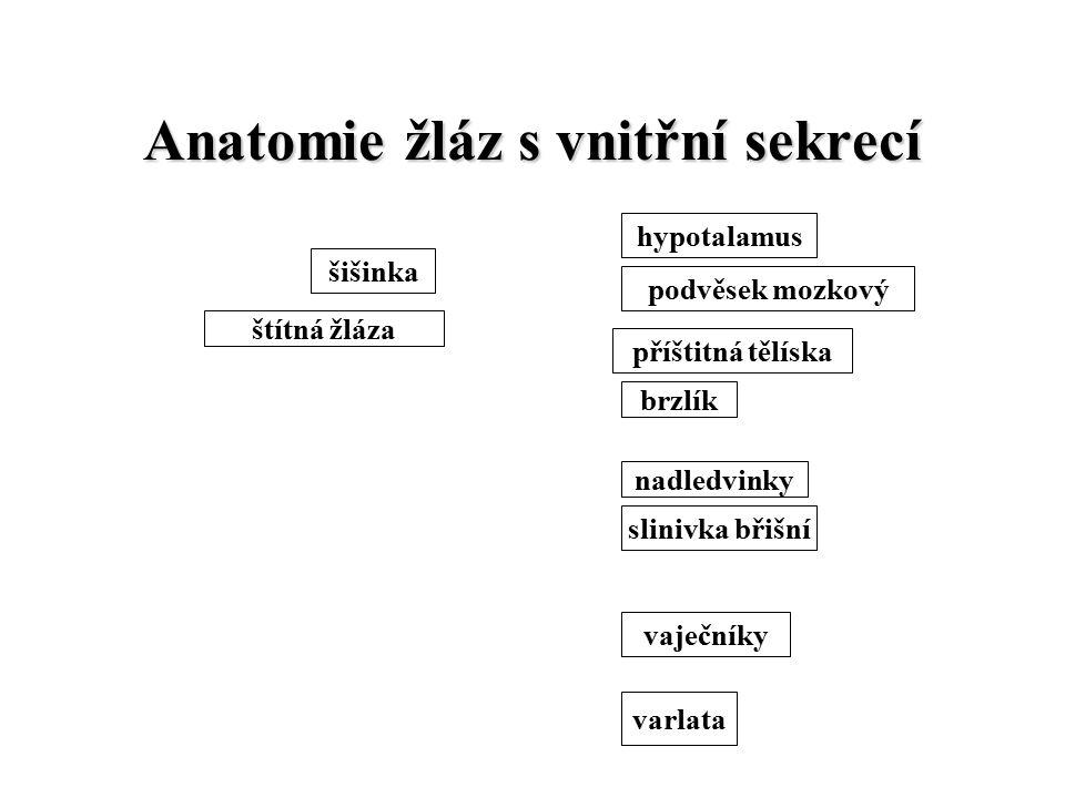 Anatomie žláz s vnitřní sekrecí