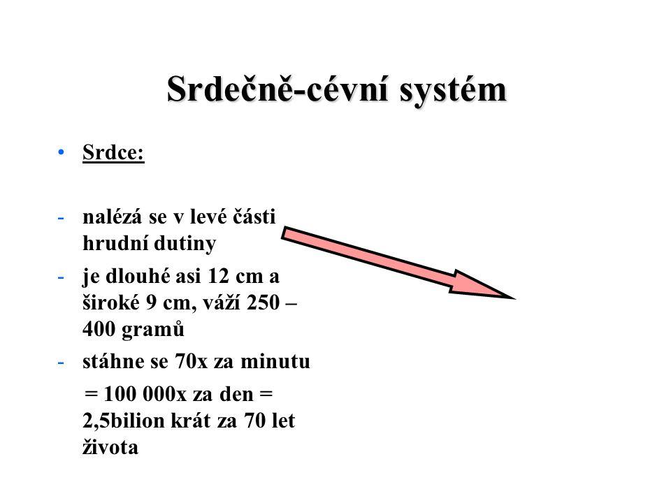 Srdečně-cévní systém Srdce: nalézá se v levé části hrudní dutiny
