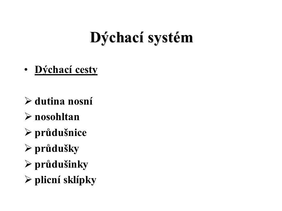 Dýchací systém Dýchací cesty dutina nosní nosohltan průdušnice