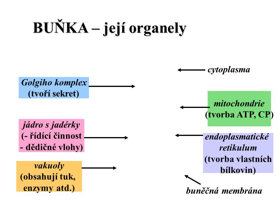 BUŇKA – její organely cytoplasma Golgiho komplex (tvoří sekret)
