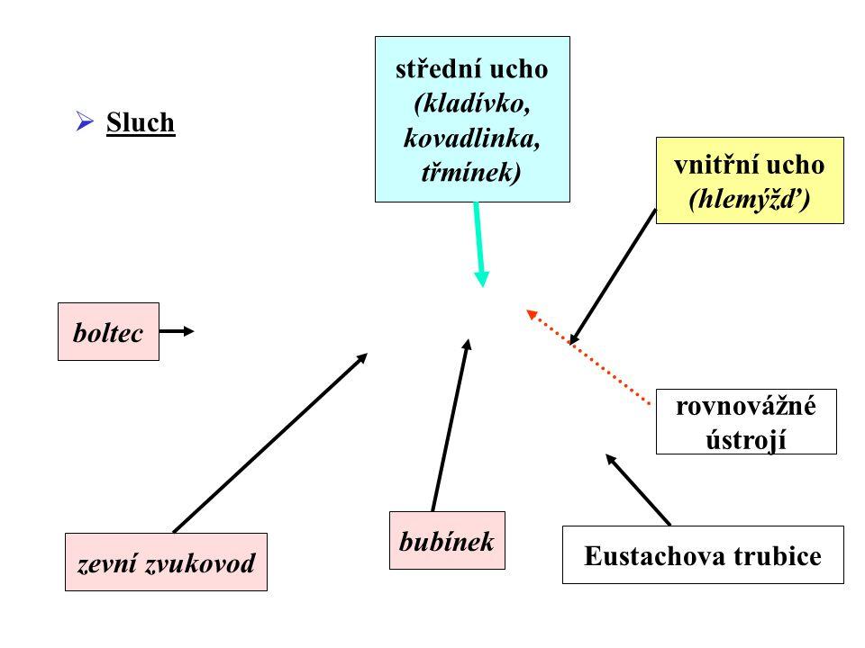 střední ucho (kladívko, kovadlinka, třmínek) Sluch. vnitřní ucho. (hlemýžď) boltec. rovnovážné.