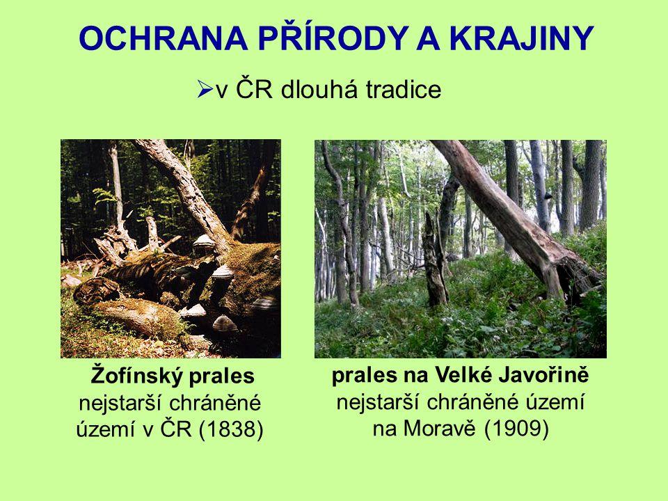 OCHRANA PŘÍRODY A KRAJINY prales na Velké Javořině