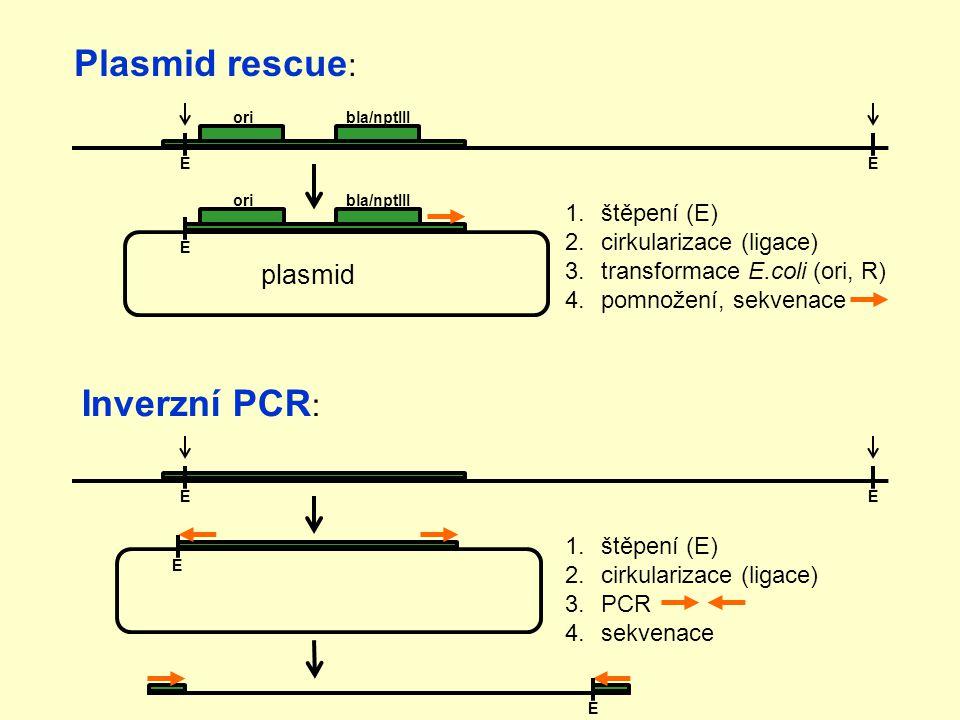 Plasmid rescue: Inverzní PCR: plasmid štěpení (E)
