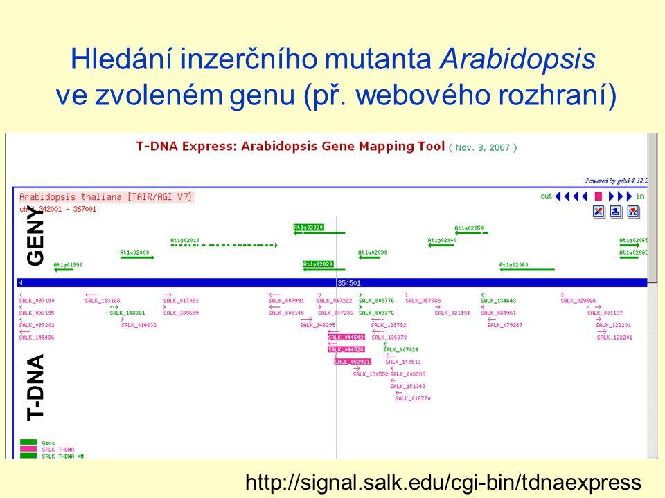 Hledání inzerčního mutanta Arabidopsis