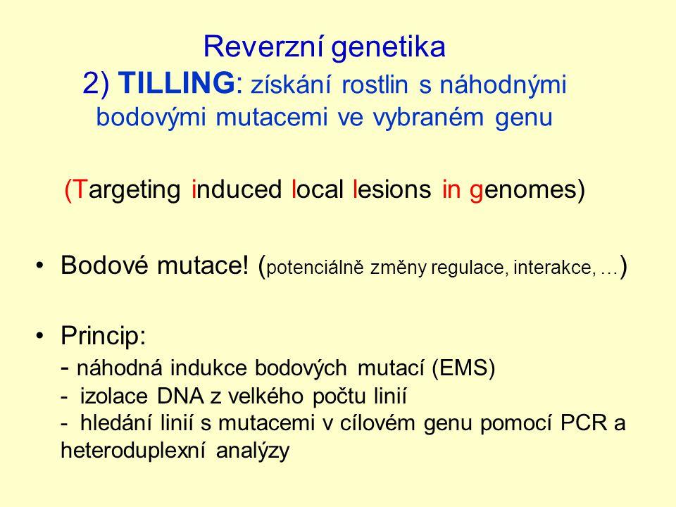Reverzní genetika 2) TILLING: získání rostlin s náhodnými bodovými mutacemi ve vybraném genu