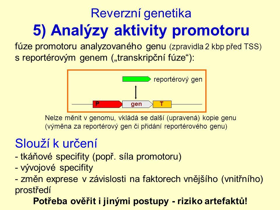 Reverzní genetika 5) Analýzy aktivity promotoru