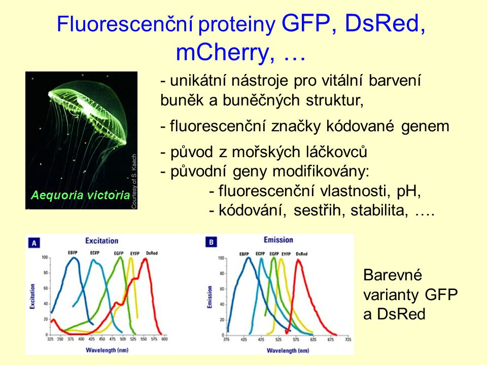 Fluorescenční proteiny GFP, DsRed, mCherry, …