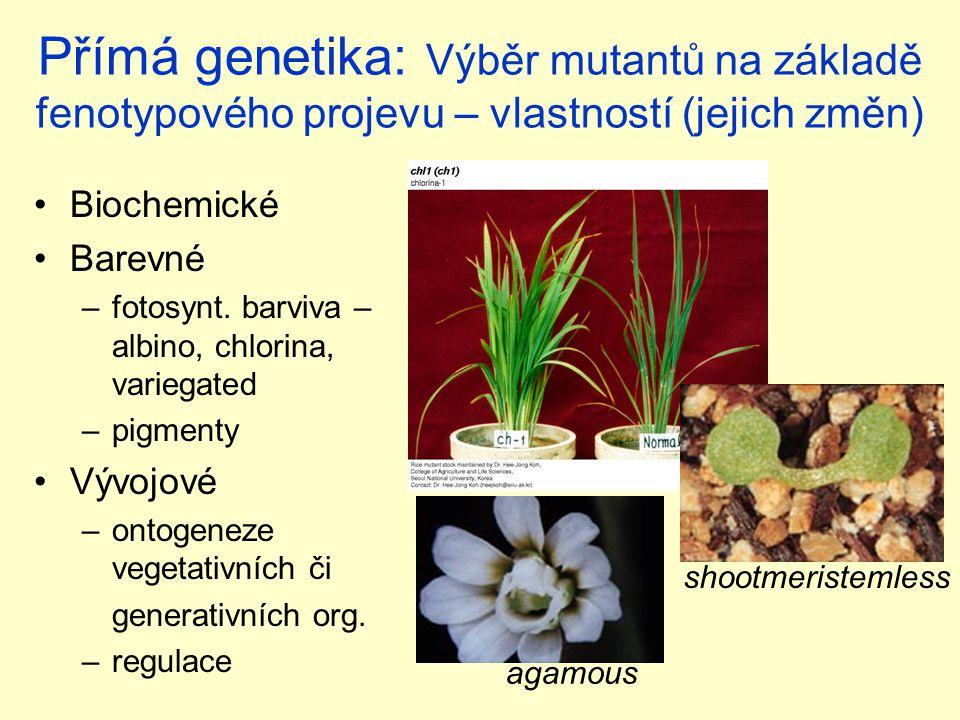 Přímá genetika: Výběr mutantů na základě fenotypového projevu – vlastností (jejich změn)
