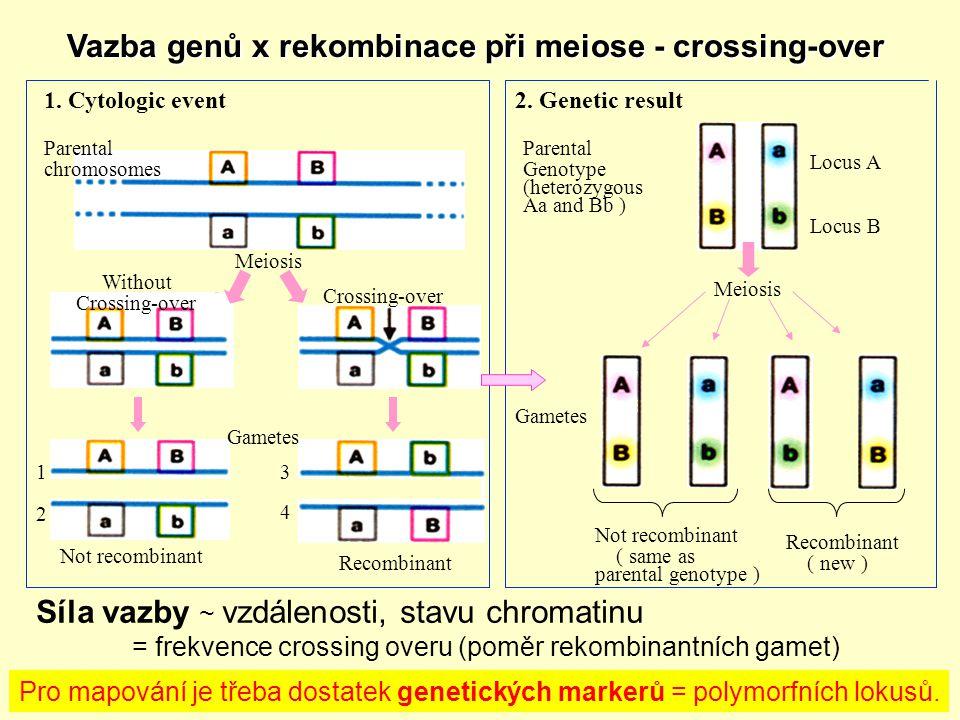 Vazba genů x rekombinace při meiose - crossing-over