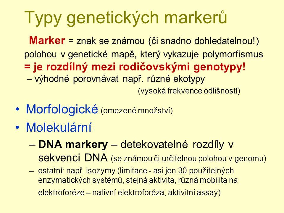 Typy genetických markerů Marker = znak se známou (či snadno dohledatelnou!) polohou v genetické mapě, který vykazuje polymorfismus = je rozdílný mezi rodičovskými genotypy! – výhodné porovnávat např. různé ekotypy (vysoká frekvence odlišností)