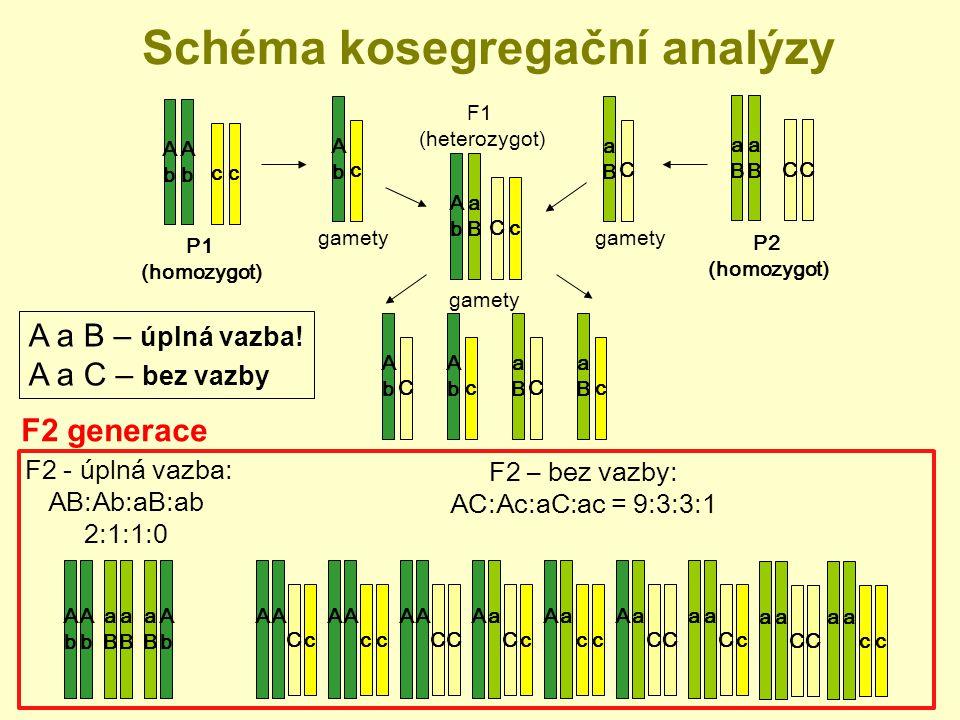 Schéma kosegregační analýzy