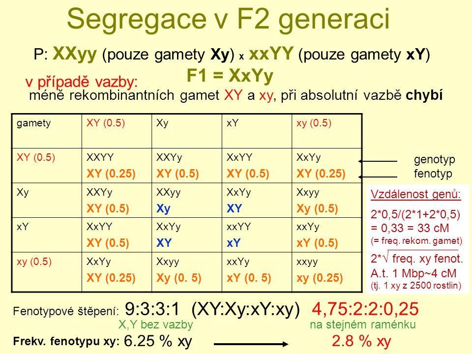 Segregace v F2 generaci F1 = XxYy