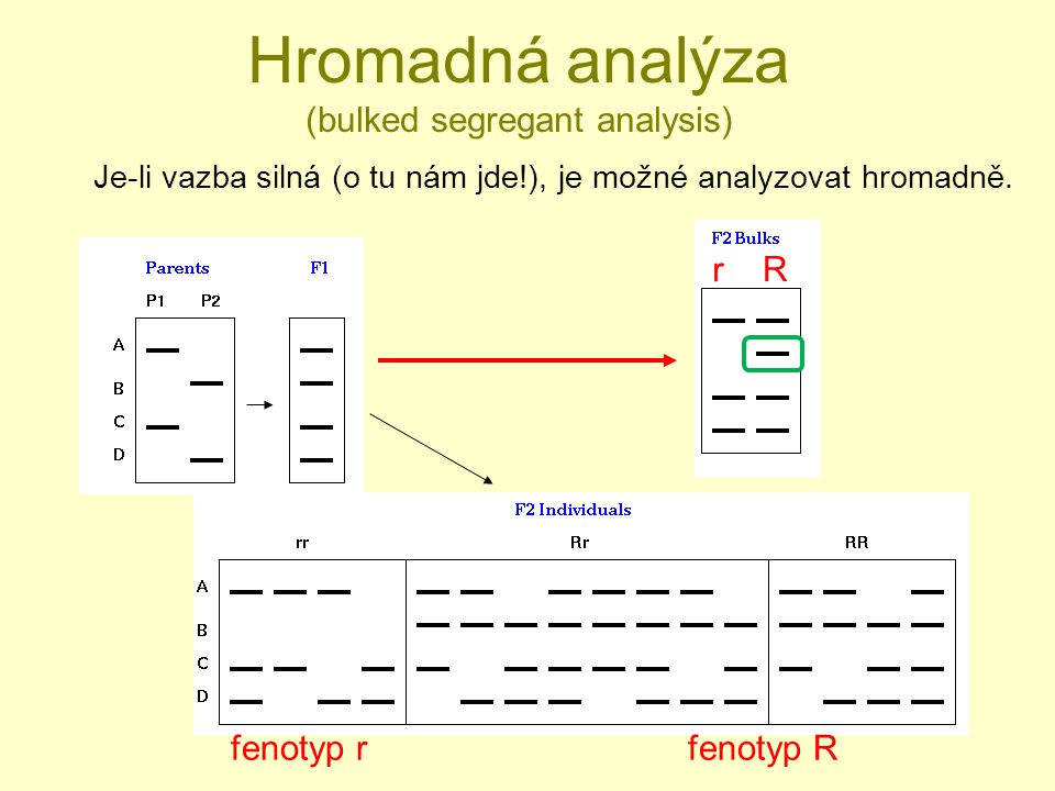 Hromadná analýza (bulked segregant analysis)