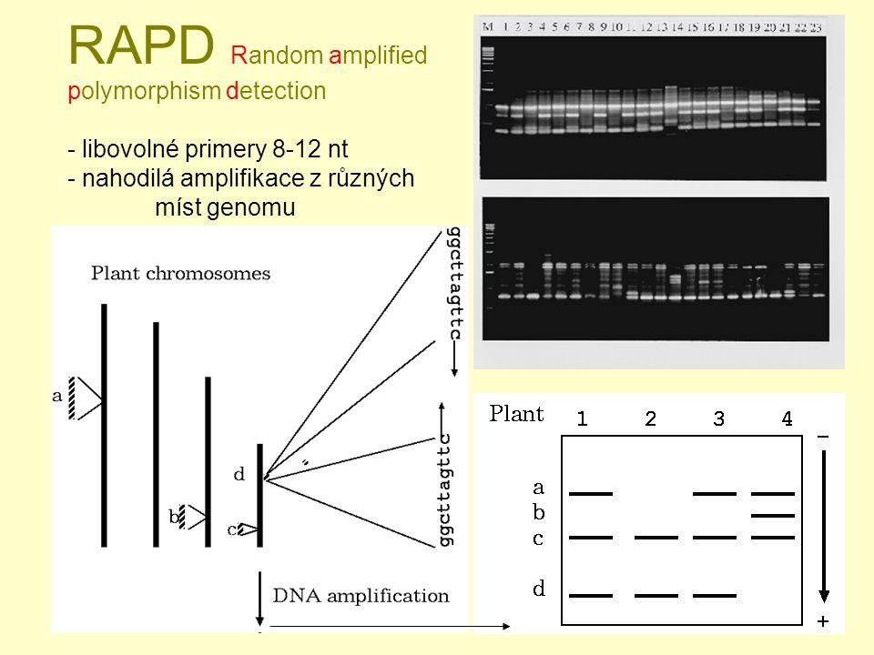 RAPD Random amplified polymorphism detection - libovolné primery 8-12 nt - nahodilá amplifikace z různých míst genomu