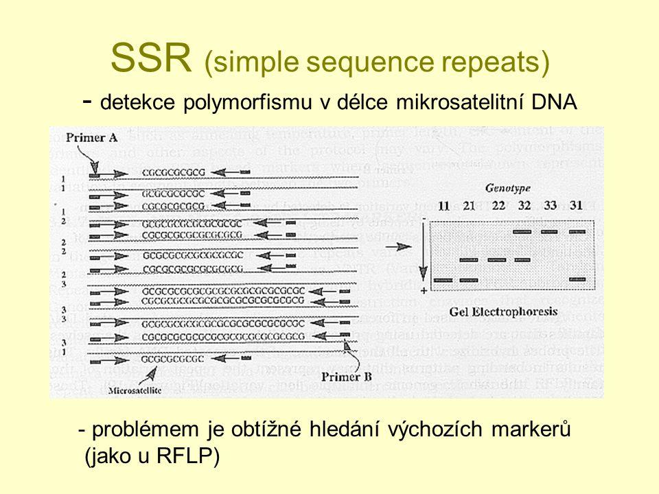 SSR (simple sequence repeats) - detekce polymorfismu v délce mikrosatelitní DNA