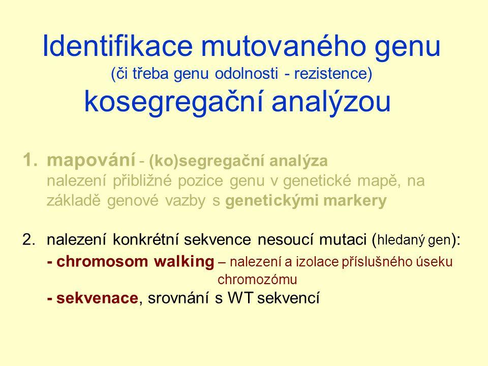 Identifikace mutovaného genu kosegregační analýzou