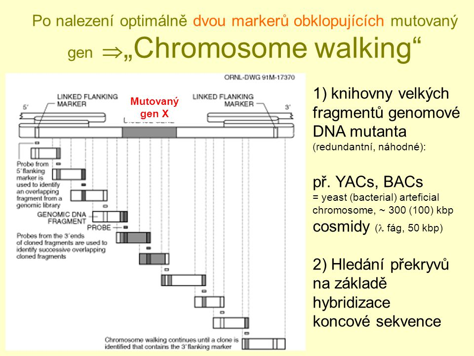 2) Hledání překryvů na základě hybridizace
