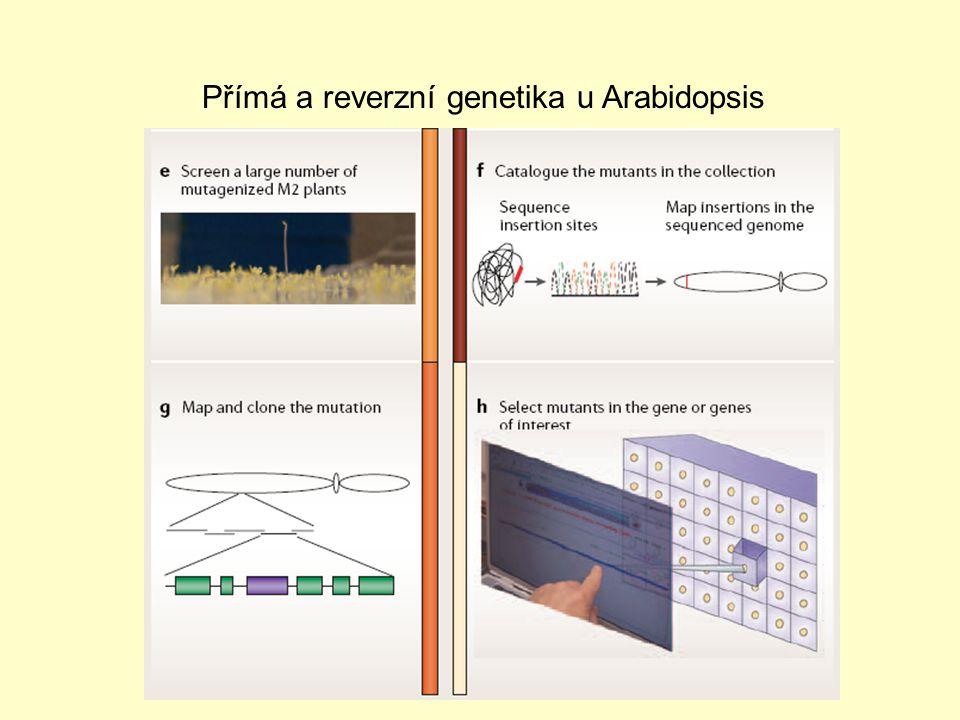 Přímá a reverzní genetika u Arabidopsis