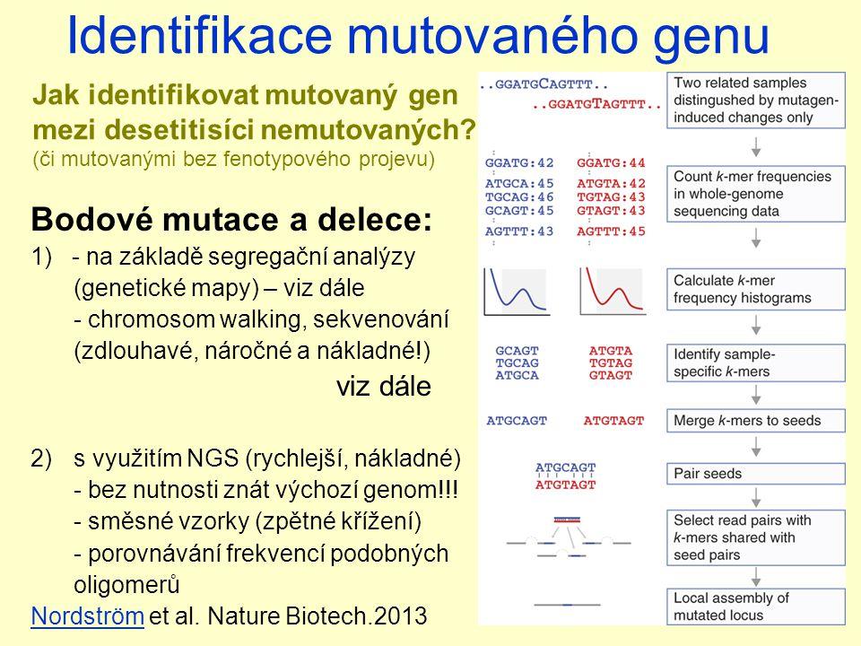 Identifikace mutovaného genu