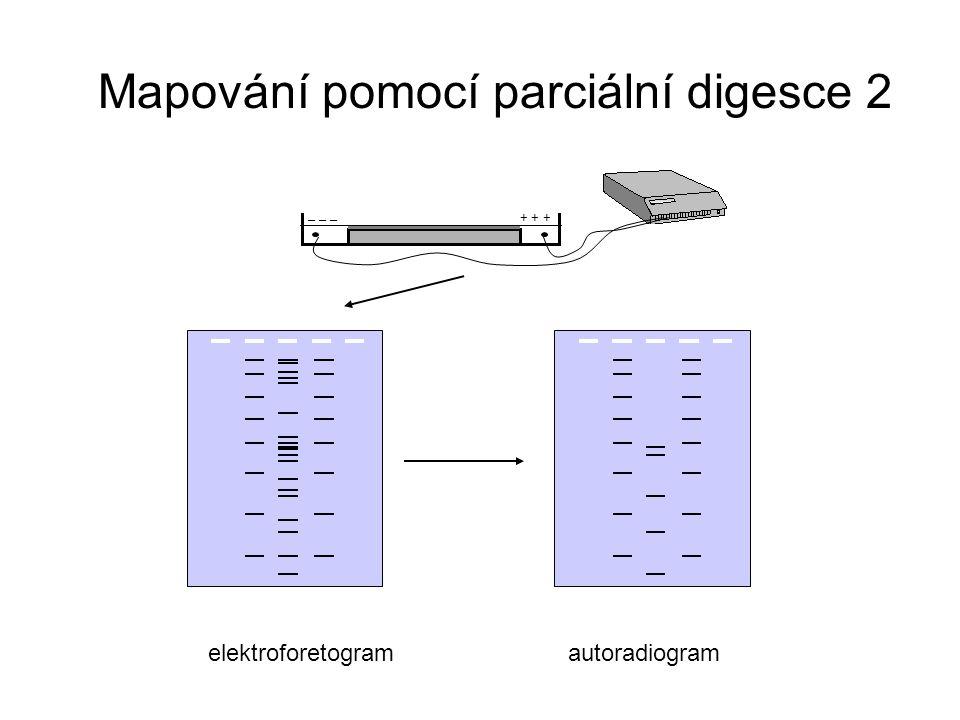 Mapování pomocí parciální digesce 2
