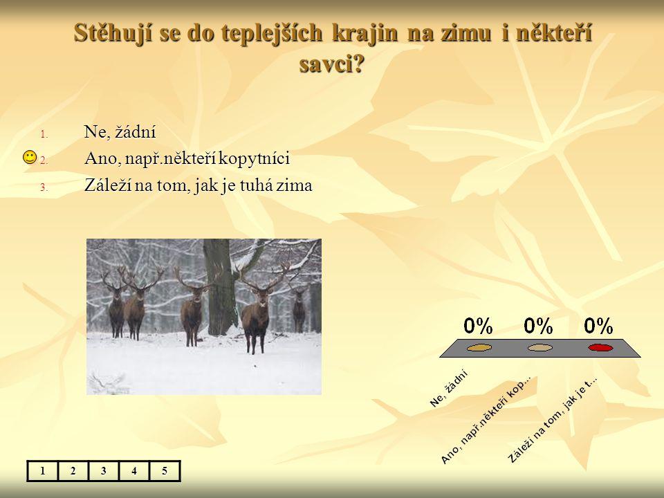 Stěhují se do teplejších krajin na zimu i někteří savci