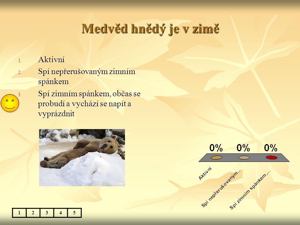 Medvěd hnědý je v zimě Aktivní Spí nepřerušovaným zimním spánkem