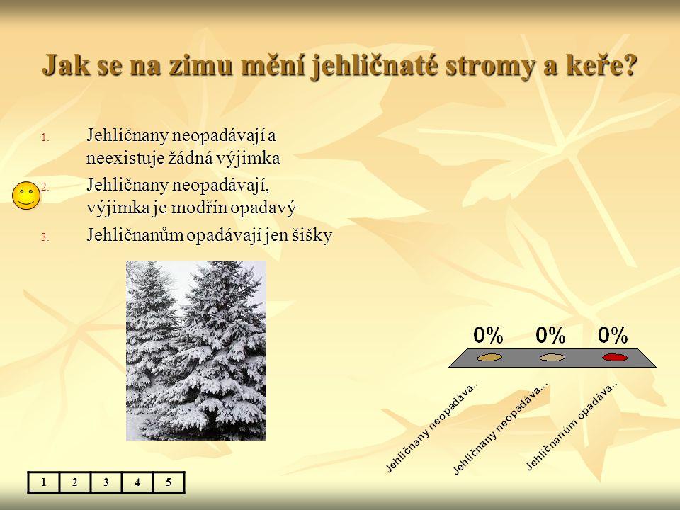Jak se na zimu mění jehličnaté stromy a keře