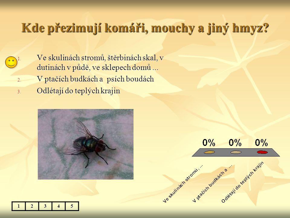 Kde přezimují komáři, mouchy a jiný hmyz