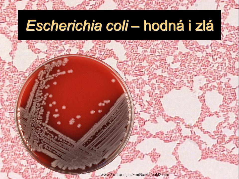 Escherichia coli – hodná i zlá