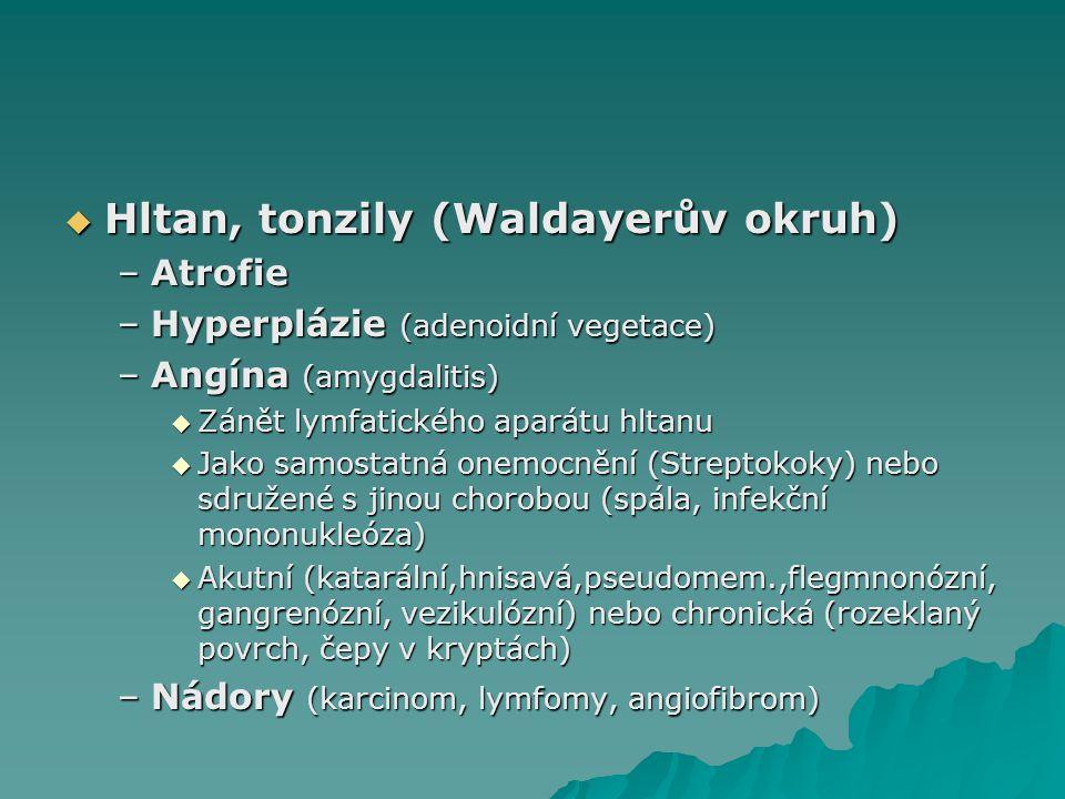 Hltan, tonzily (Waldayerův okruh)