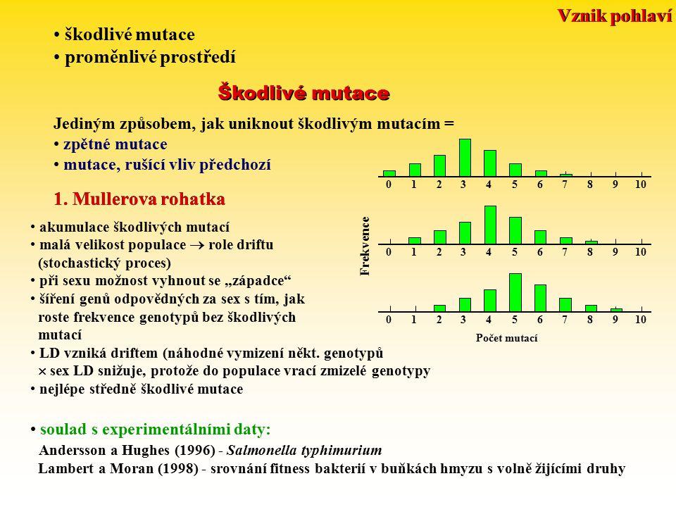 Vznik pohlaví škodlivé mutace proměnlivé prostředí Škodlivé mutace