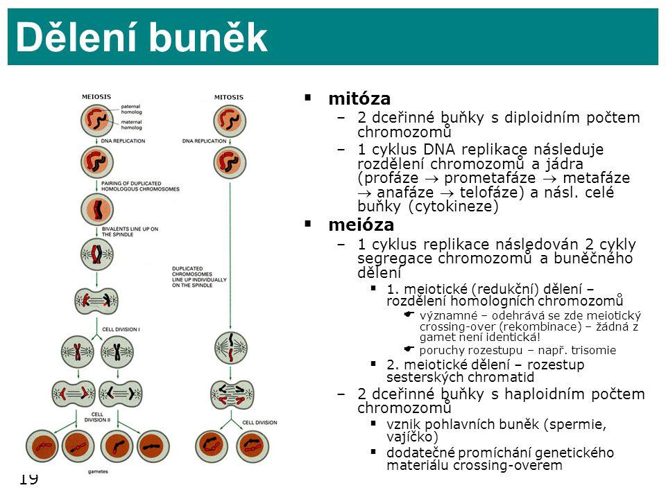 Dělení buněk mitóza meióza
