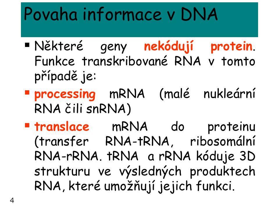 Povaha informace v DNA Některé geny nekódují protein. Funkce transkribované RNA v tomto případě je: