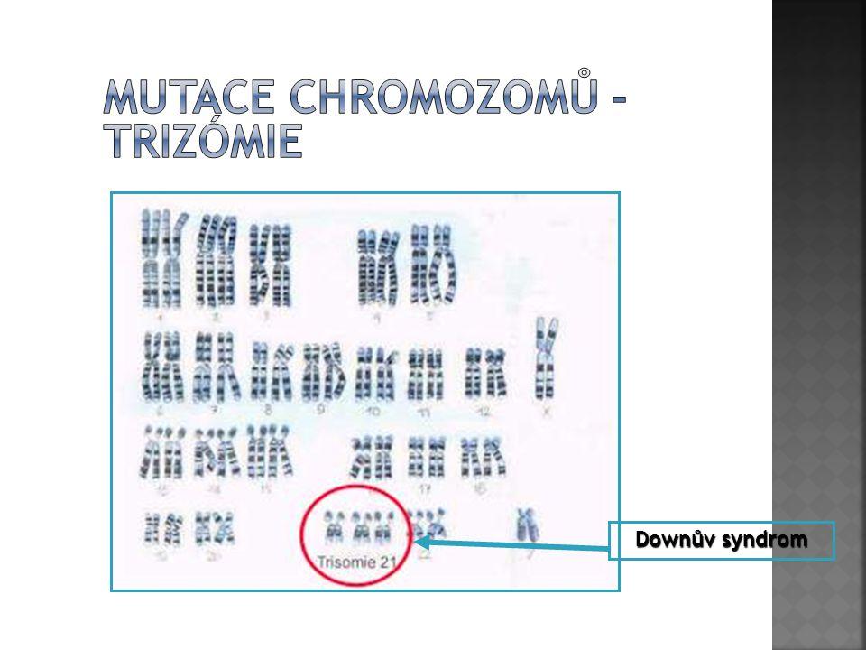 Mutace chromozomů - trizómie