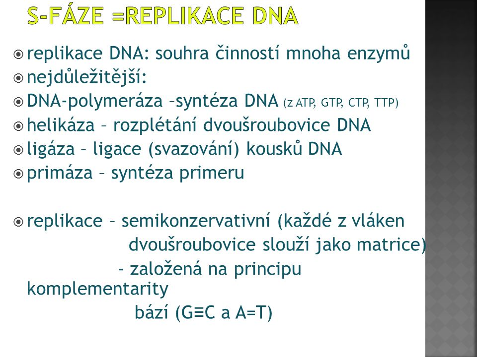 S-fáze =replikace DNA replikace DNA: souhra činností mnoha enzymů