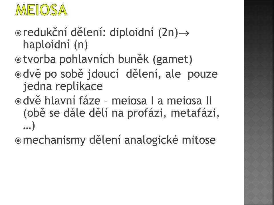 meiosa redukční dělení: diploidní (2n) haploidní (n)