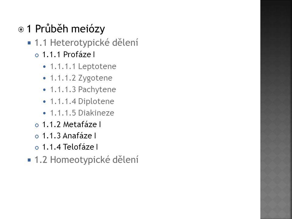 1 Průběh meiózy 1.1 Heterotypické dělení 1.2 Homeotypické dělení