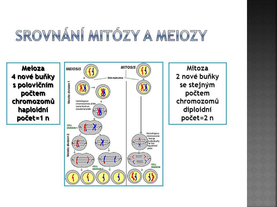 Srovnání mitózy a meiozy