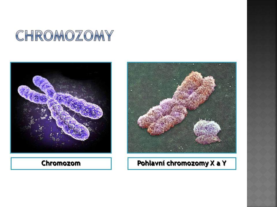 Pohlavní chromozomy X a Y