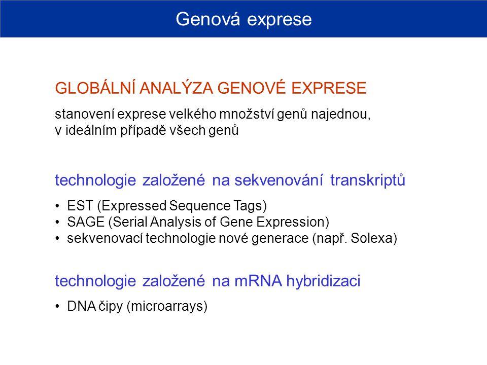 Genová exprese GLOBÁLNÍ ANALÝZA GENOVÉ EXPRESE