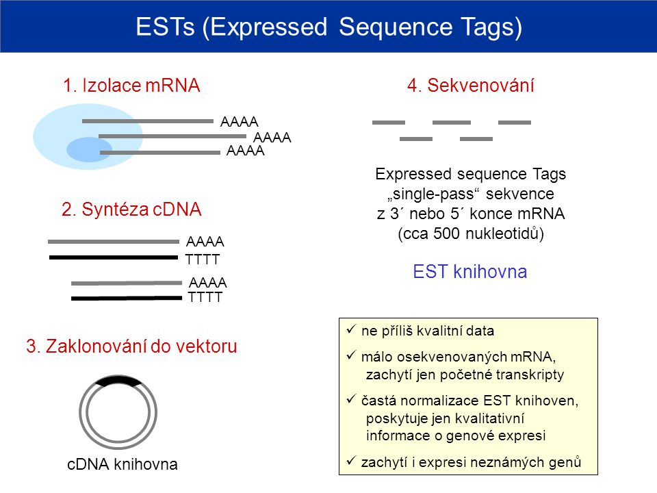 ESTs (Expressed Sequence Tags)