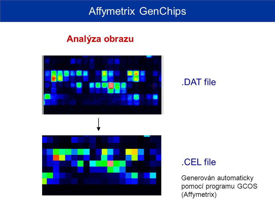 Affymetrix GenChips Analýza obrazu .DAT file .CEL file