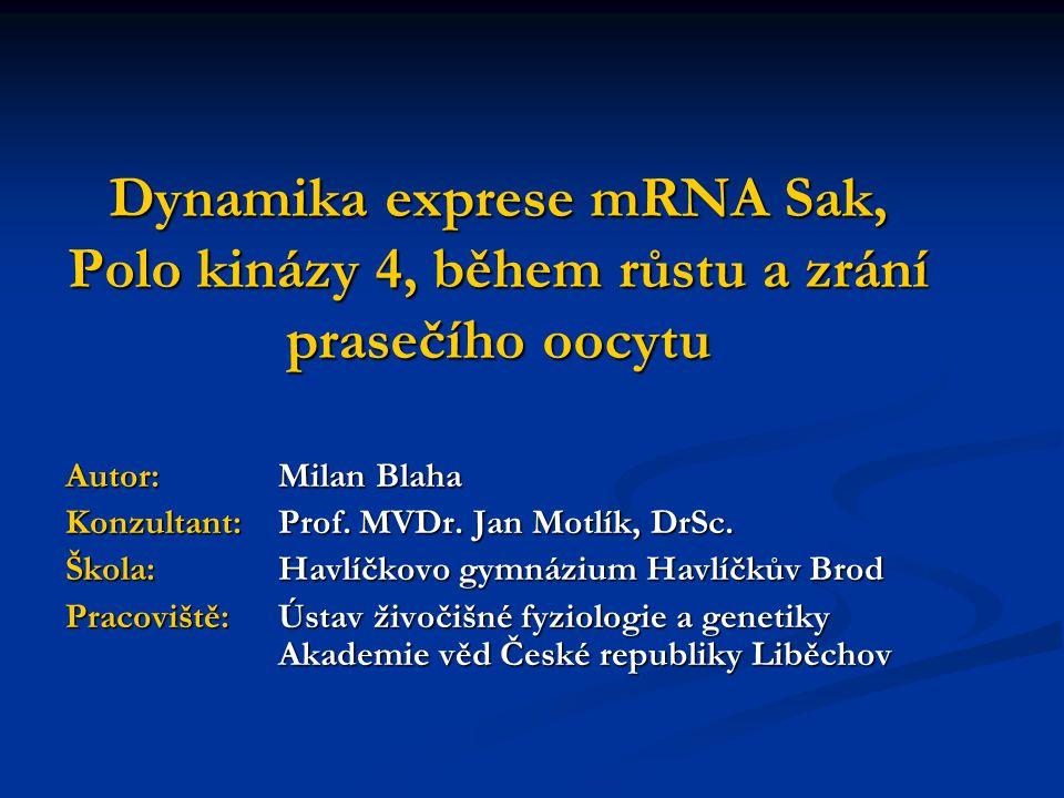 Dynamika exprese mRNA Sak, Polo kinázy 4, během růstu a zrání prasečího oocytu