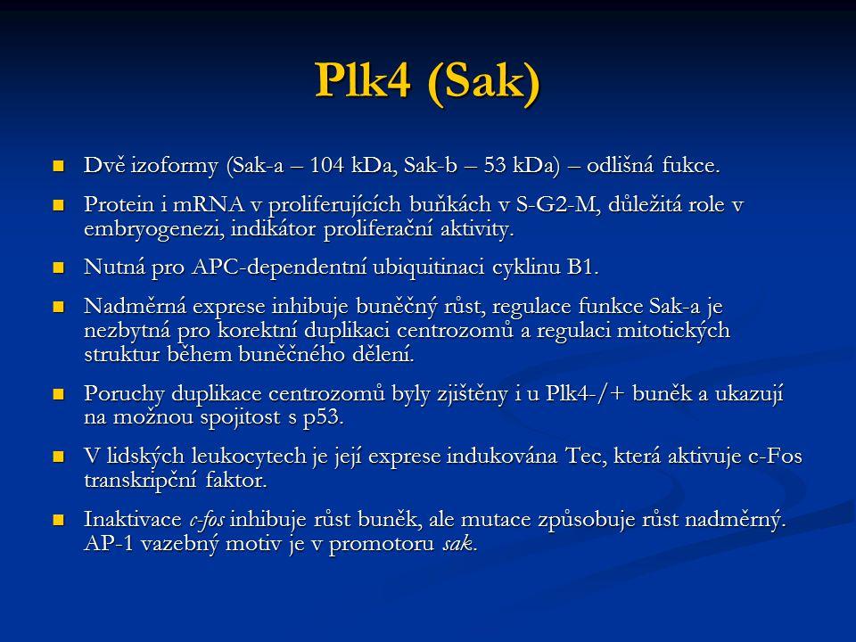 Plk4 (Sak) Dvě izoformy (Sak-a – 104 kDa, Sak-b – 53 kDa) – odlišná fukce.