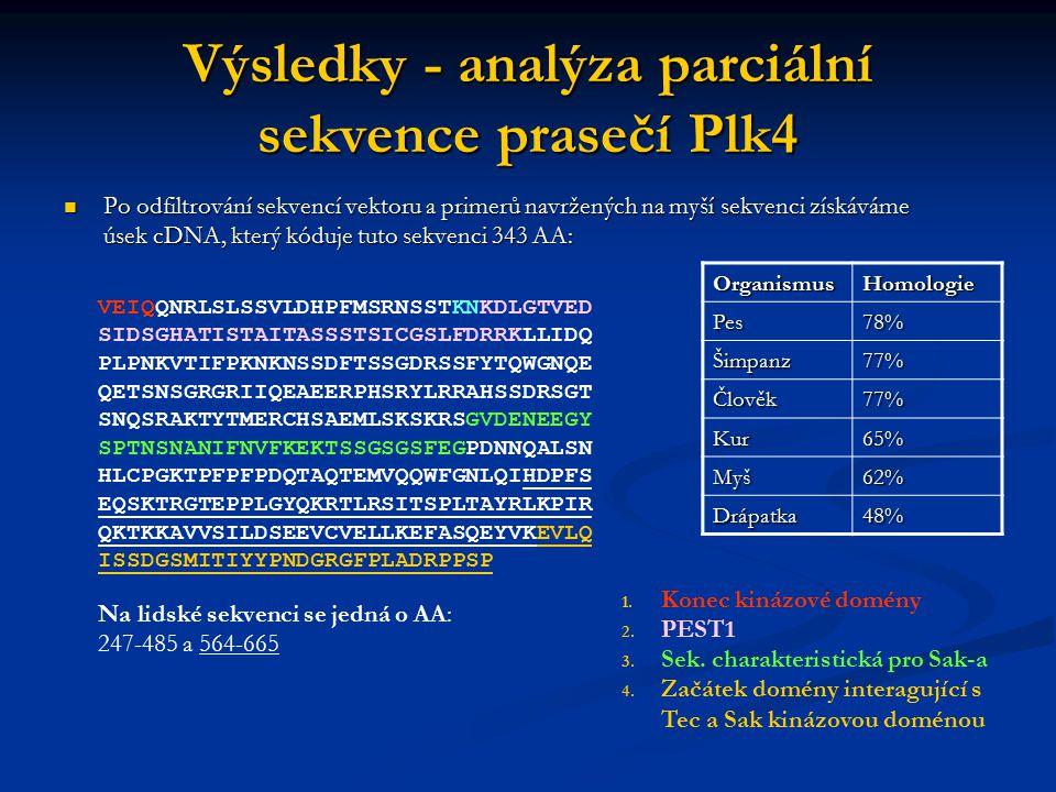 Výsledky - analýza parciální sekvence prasečí Plk4