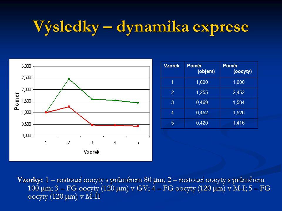 Výsledky – dynamika exprese