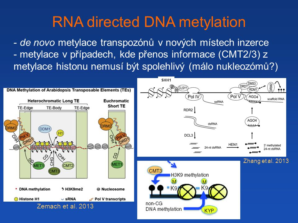 RNA directed DNA metylation