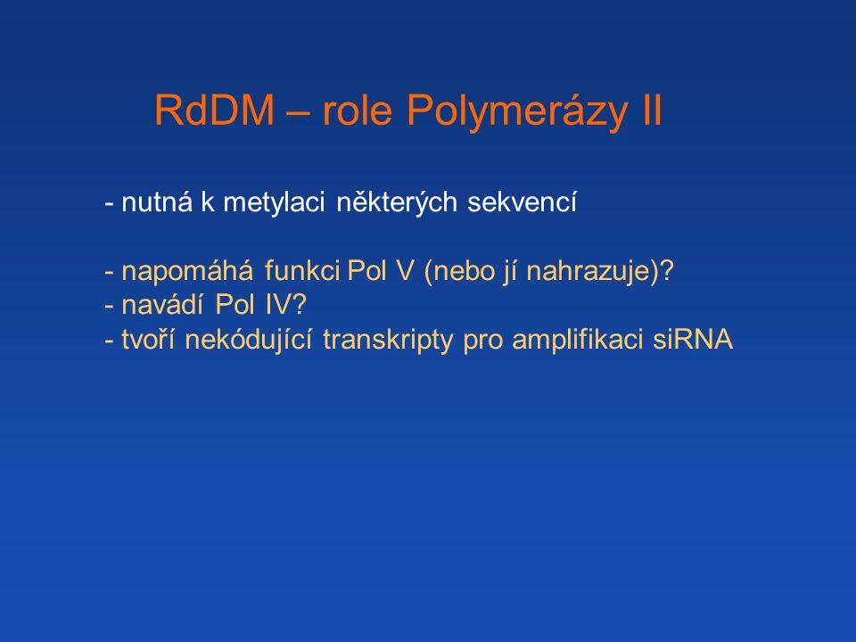 RdDM – role Polymerázy II