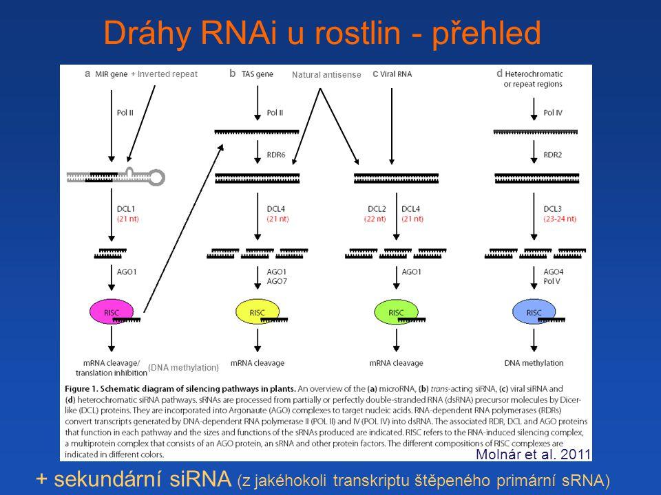 Dráhy RNAi u rostlin - přehled